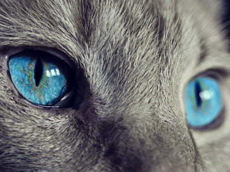blue cat's eyes