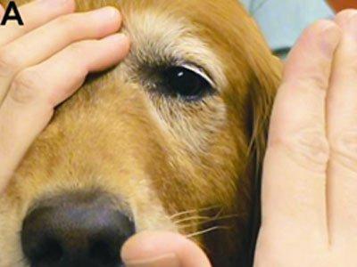 Pregled vida kod psa testiranjem menace odgovora