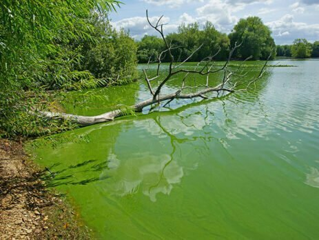 jezero sa algama